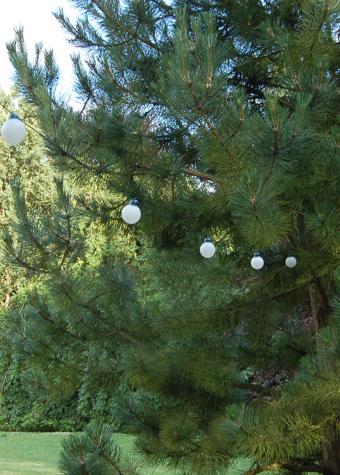 White Balls 2